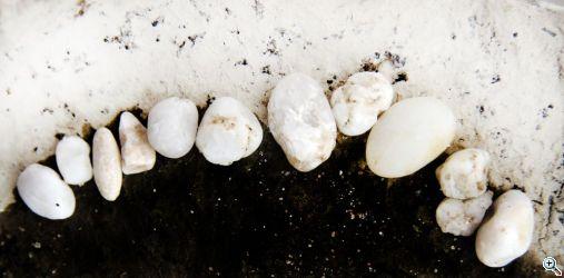 dreher rhein white teeth 7790 web